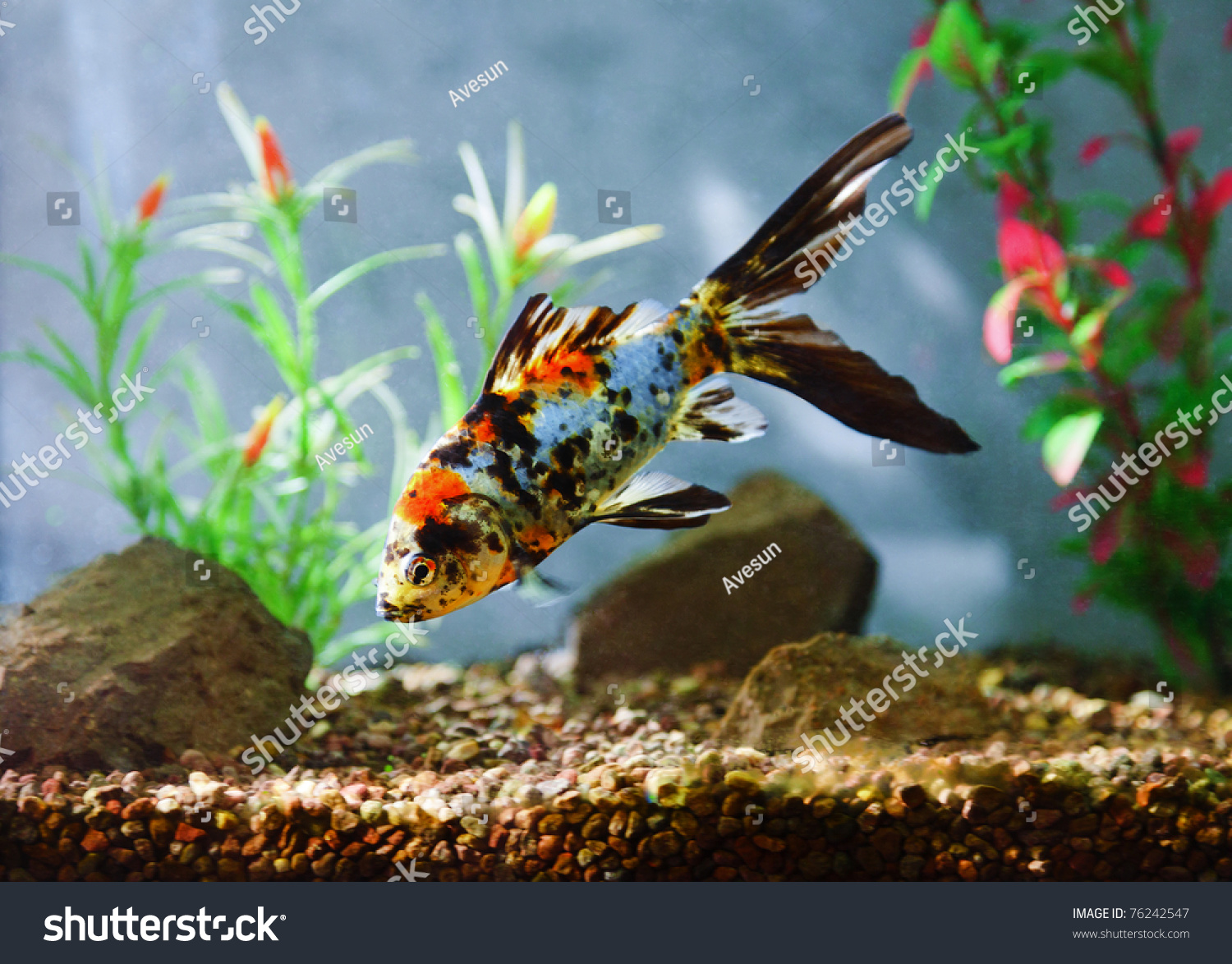 Image gallery koi carp aquarium for Koi fish tank