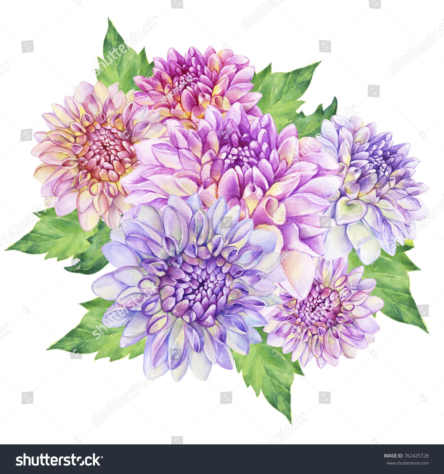 Bouquet Purple Dahlia Flower Watercolor Hand Stock Illustration 762425728