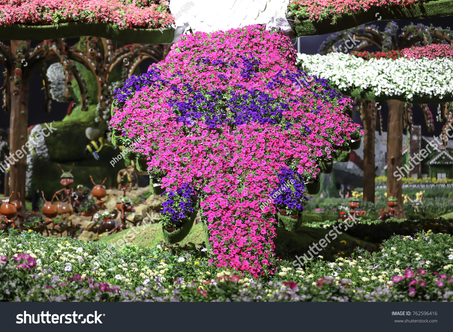 Dubai Uae 07 November 2017 Petunias Stock Photo Edit Now 762596416