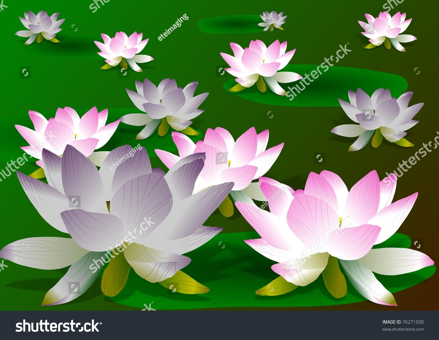 Pink purple lotus flowers leaves on stock illustration 76271500 pink and purple lotus flowers with leaves on a green background lotus flowers izmirmasajfo Gallery