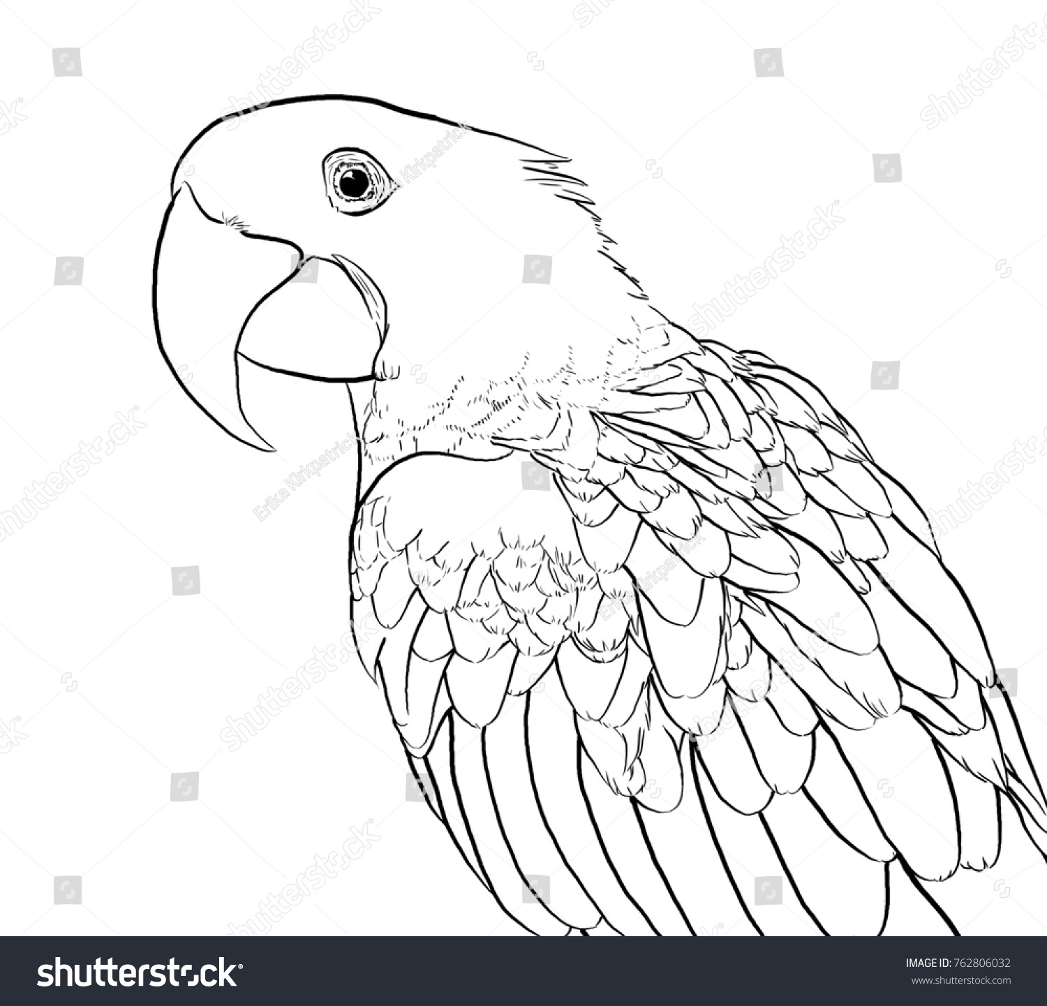 Hyacinth Macaw Lineart Coloring Page Stock Illustration 762806032 ...