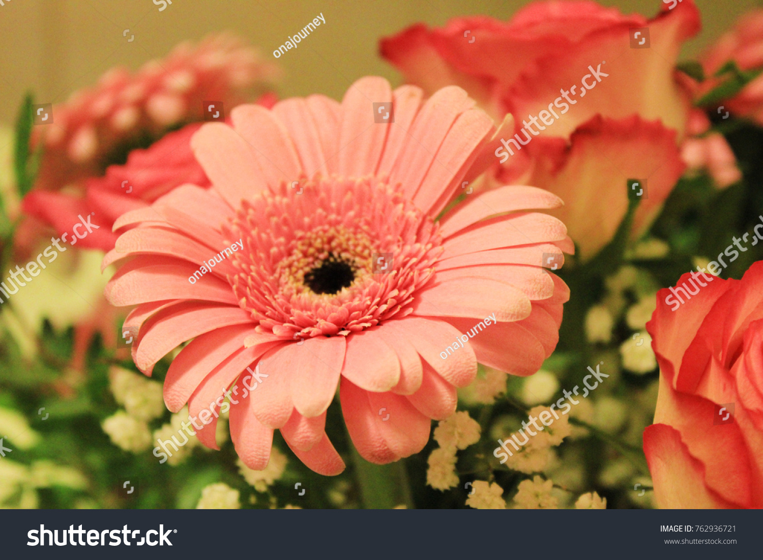 Gerbera daisy pink flower assorted bouquet stock photo edit now gerbera daisy pink flower in assorted bouquet by color close up of single beautiful flower izmirmasajfo