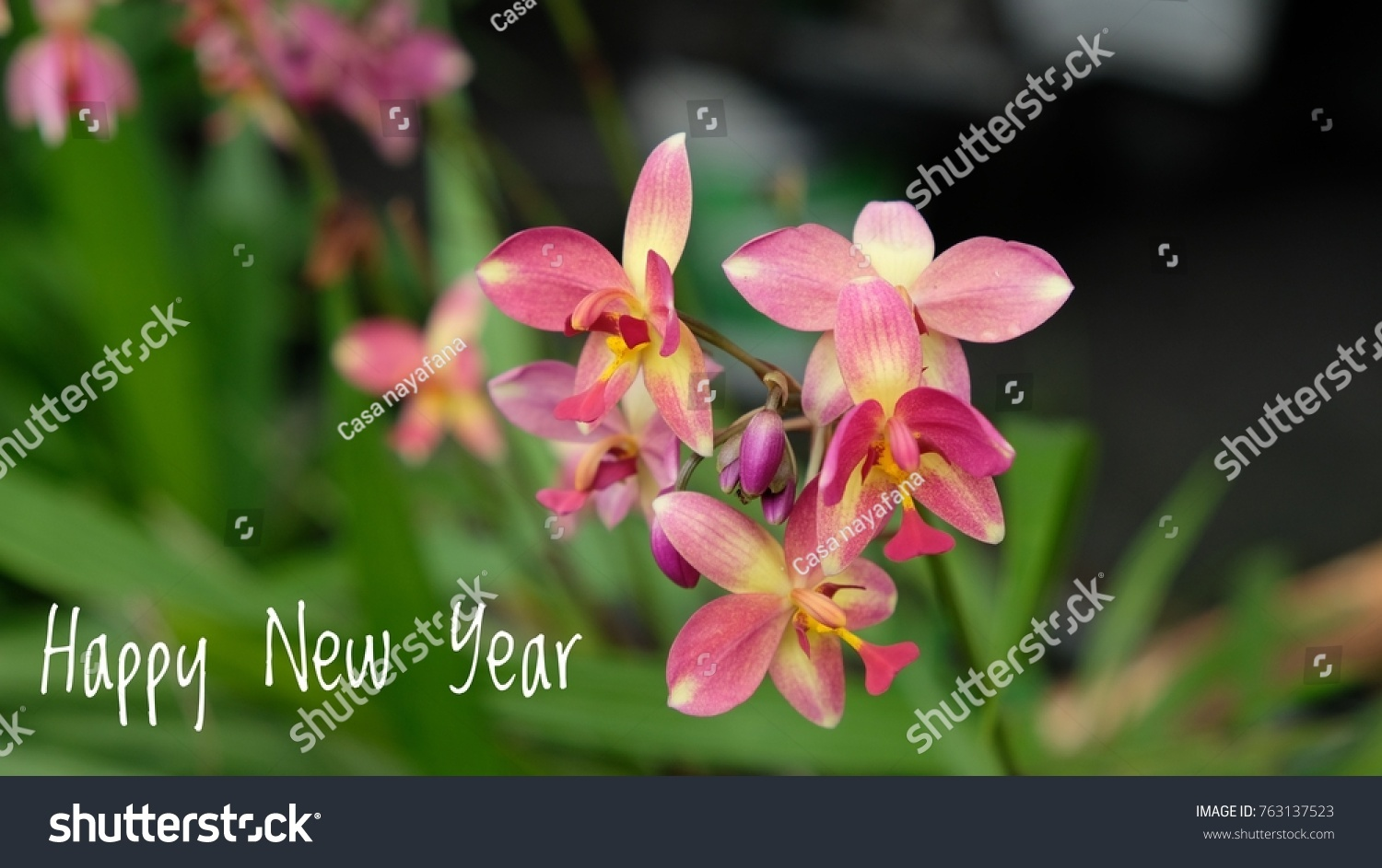 Beautiful Flowers Blurry Background New Year Stock Photo Royalty