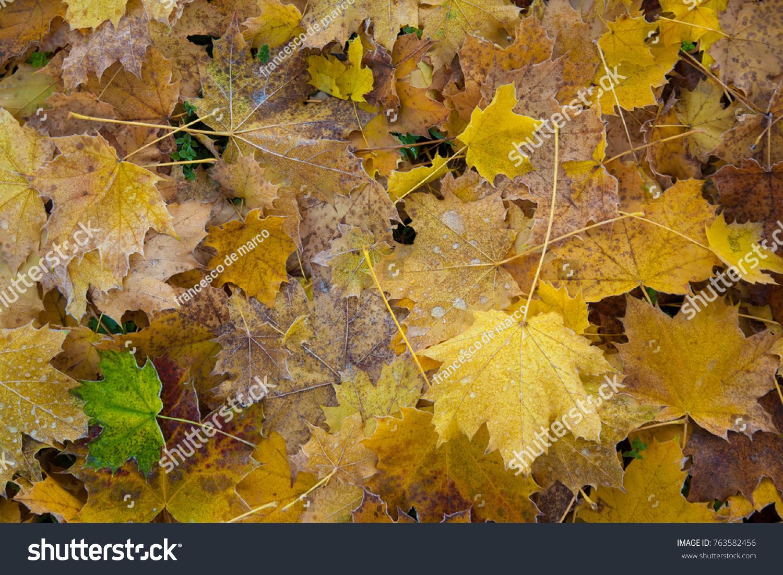 autumn leaves as background   EZ Canvas