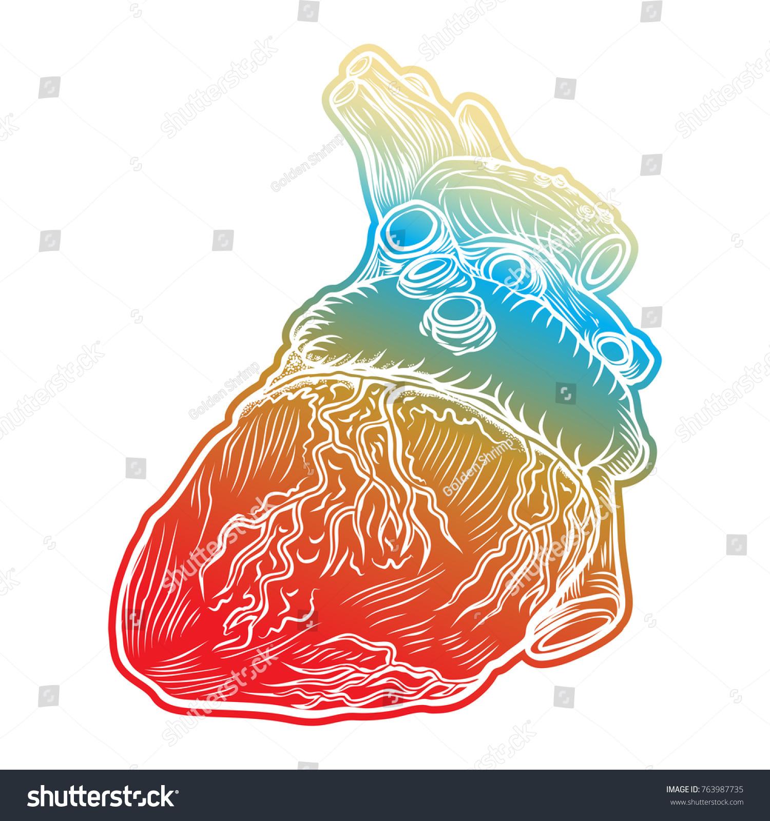 Red Human Heart Aorta Veins Arteries Stock Vector 763987735 ...