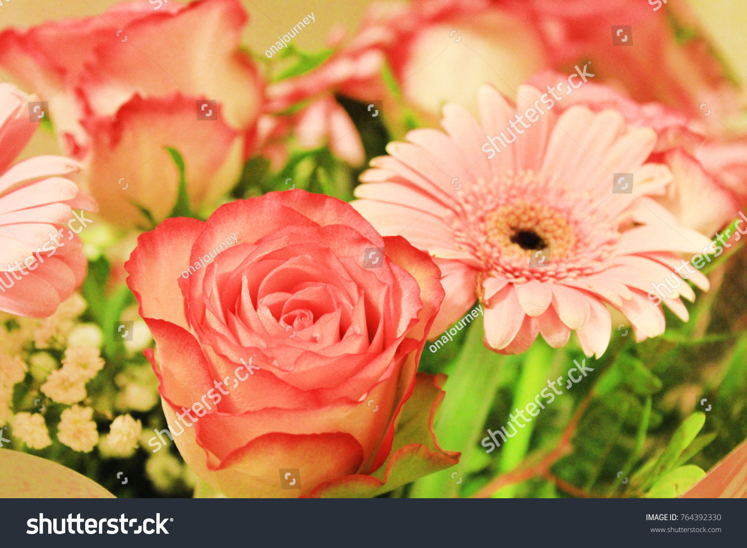 Roses Gerbera Daisy Flower Bouquet Soft Stock Photo Edit Now
