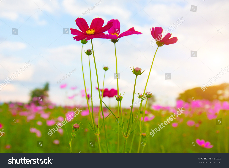 Beautiful colorful winter flowers stock photo edit now 764490229 beautiful colorful winter flowers izmirmasajfo