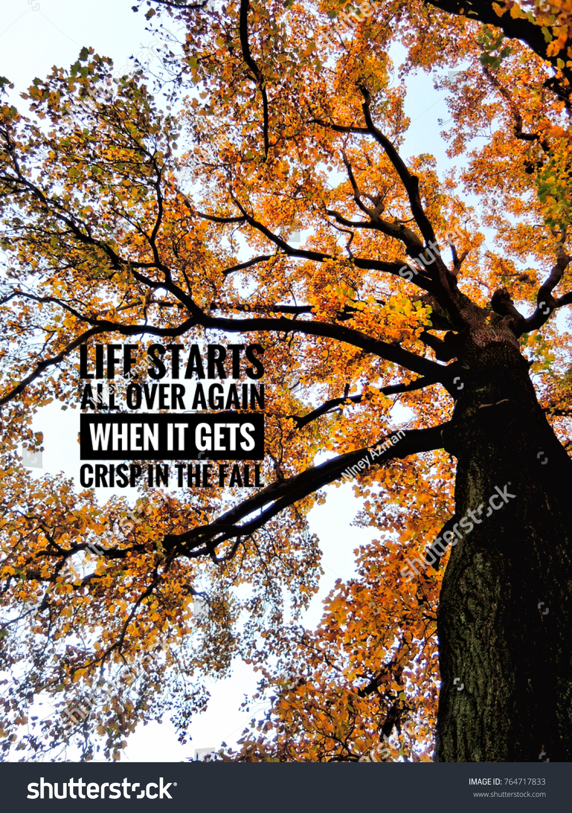 Autumn Leaves On Tree Text Quotes Stock Photo Edit Now 764717833