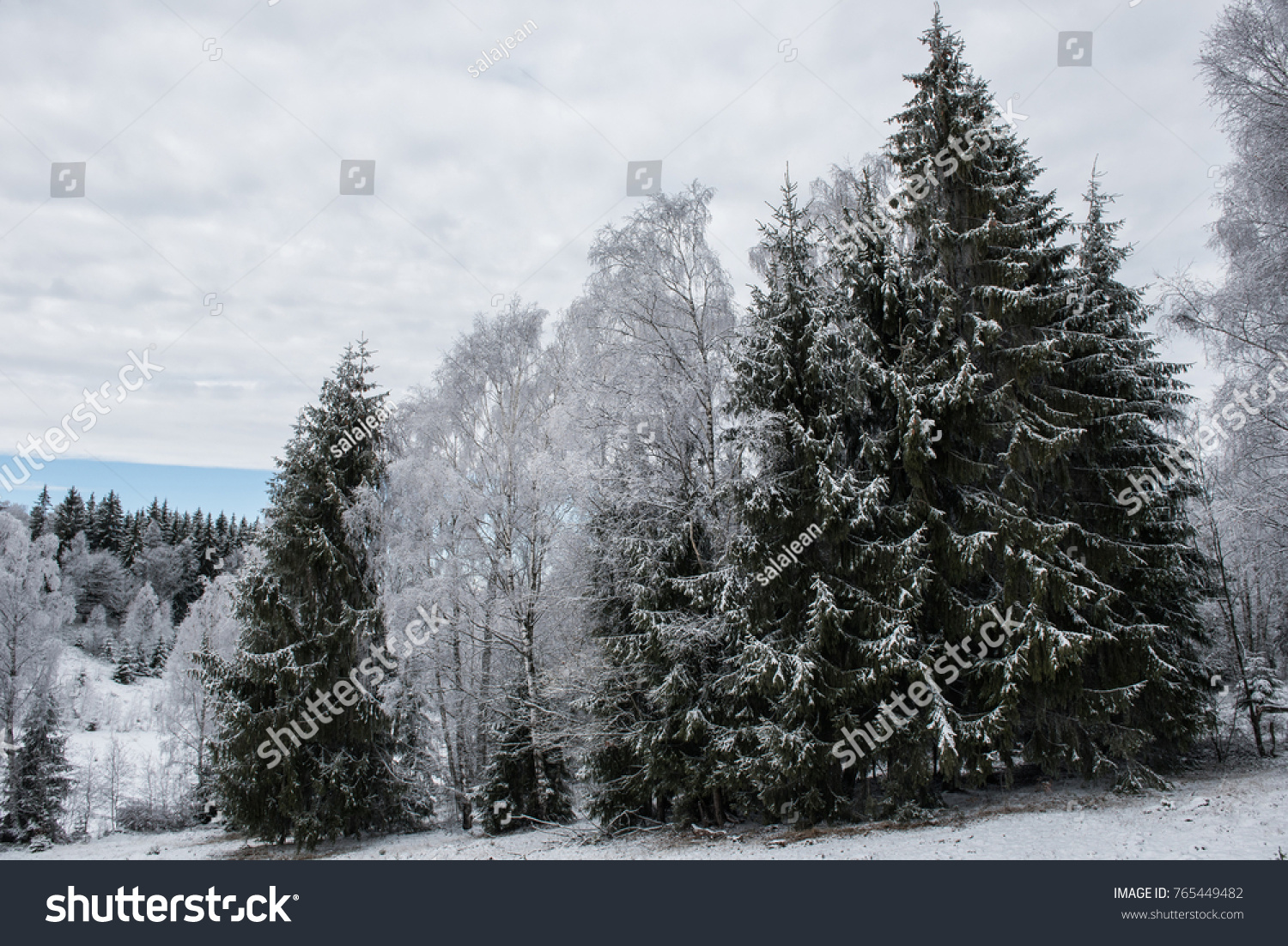 Christmas background with snowy trees winter holidays greetings christmas background with snowy trees winter holidays greetings ez canvas m4hsunfo