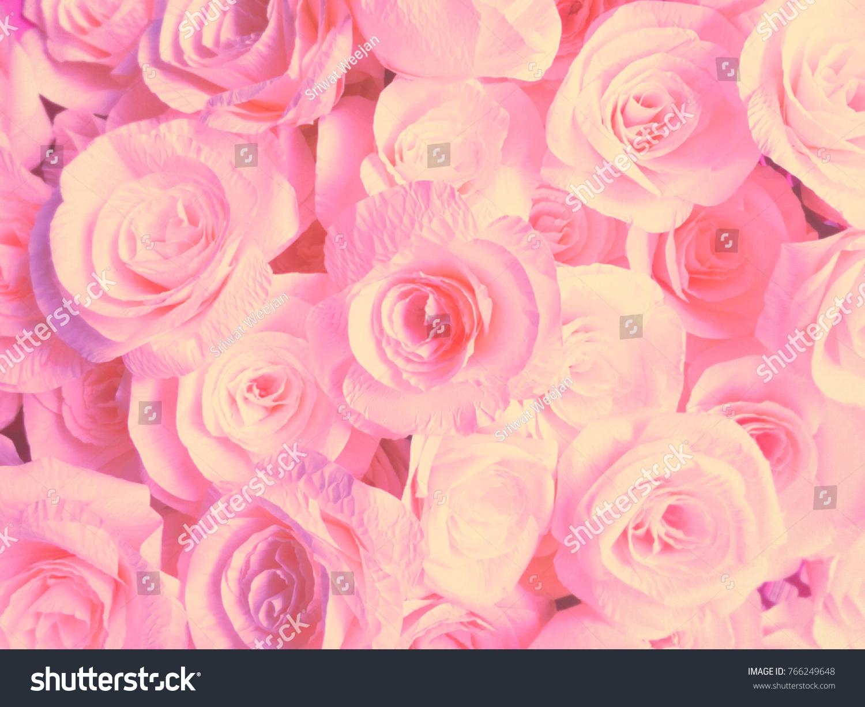 Rose Pink Raised Representative Beauty Cute Stock Photo Edit Now