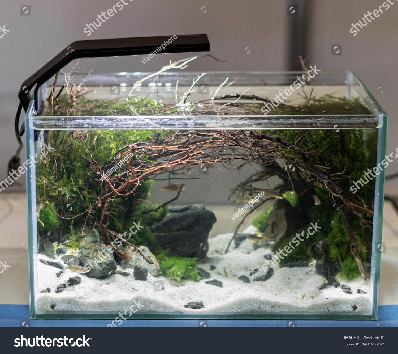 Freshwater Aquascape Aquarium Driftwood Living Plants Stock Photo Edit Now 766426690