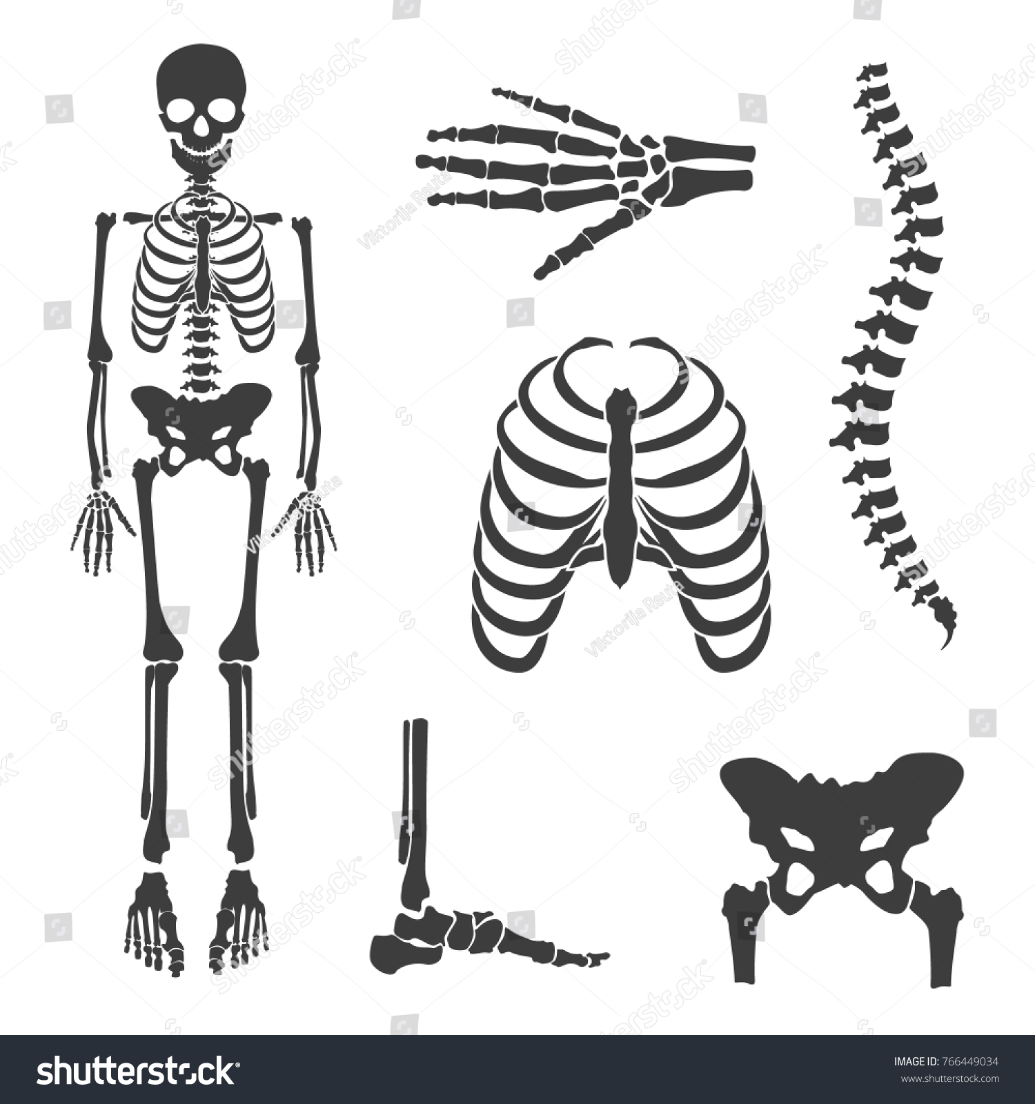 Vector Illustration Parts Human Skeleton Human Stock Vektorgrafik