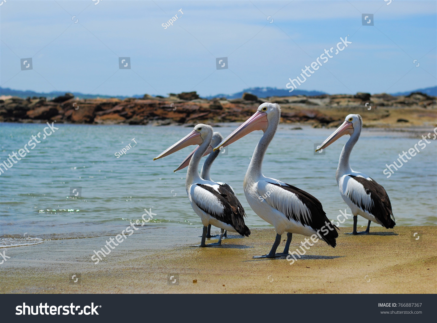 Group Pelicans Standing On Beach Near Stock Photo (Edit Now ...