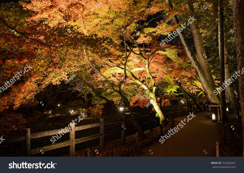 Beautiful Autumn Scenery Japanese Garden Maple Stock Photo (Royalty ...