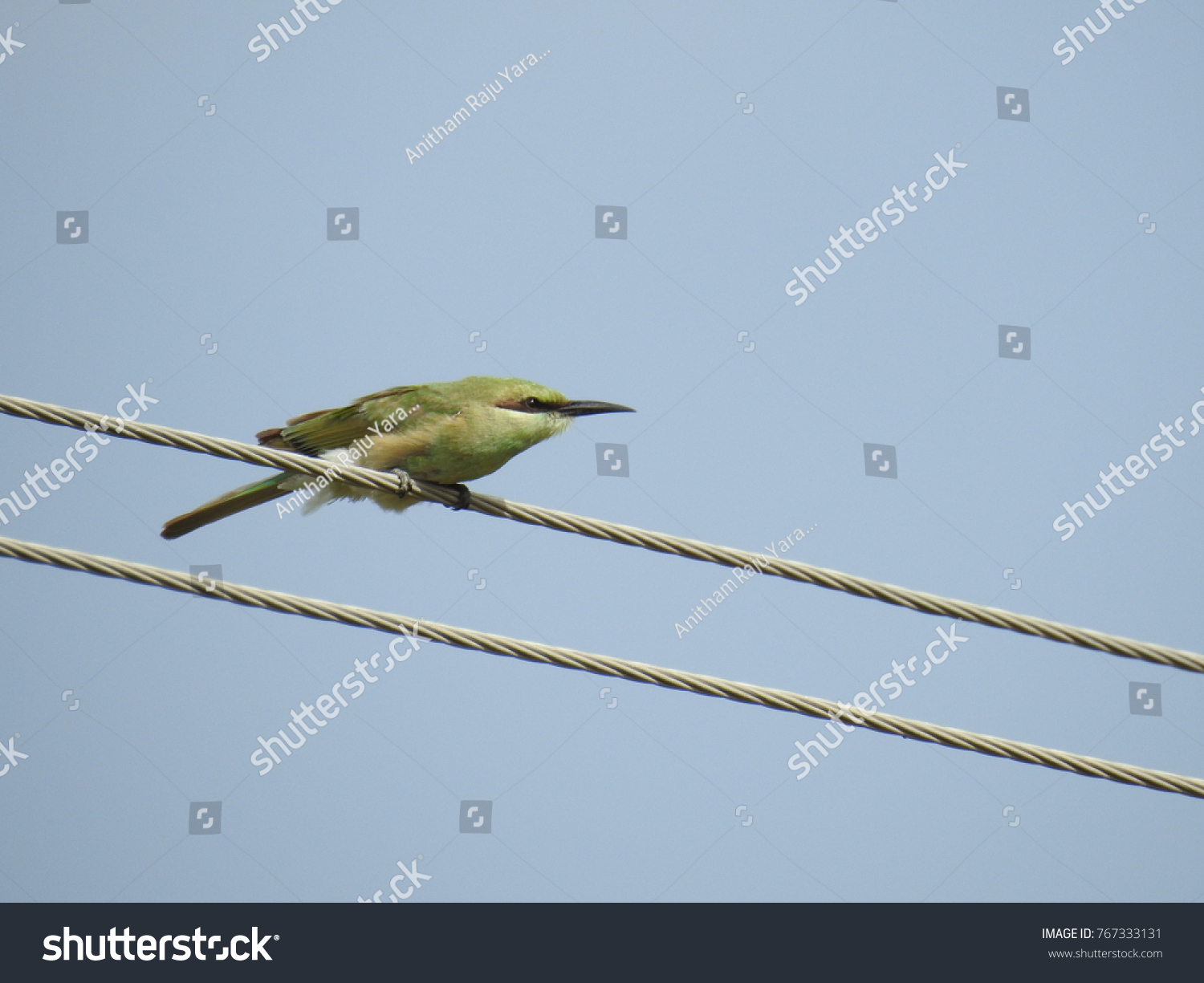 Green Beeeater Sitting On Wire Grassland Stock Photo (Edit Now ...