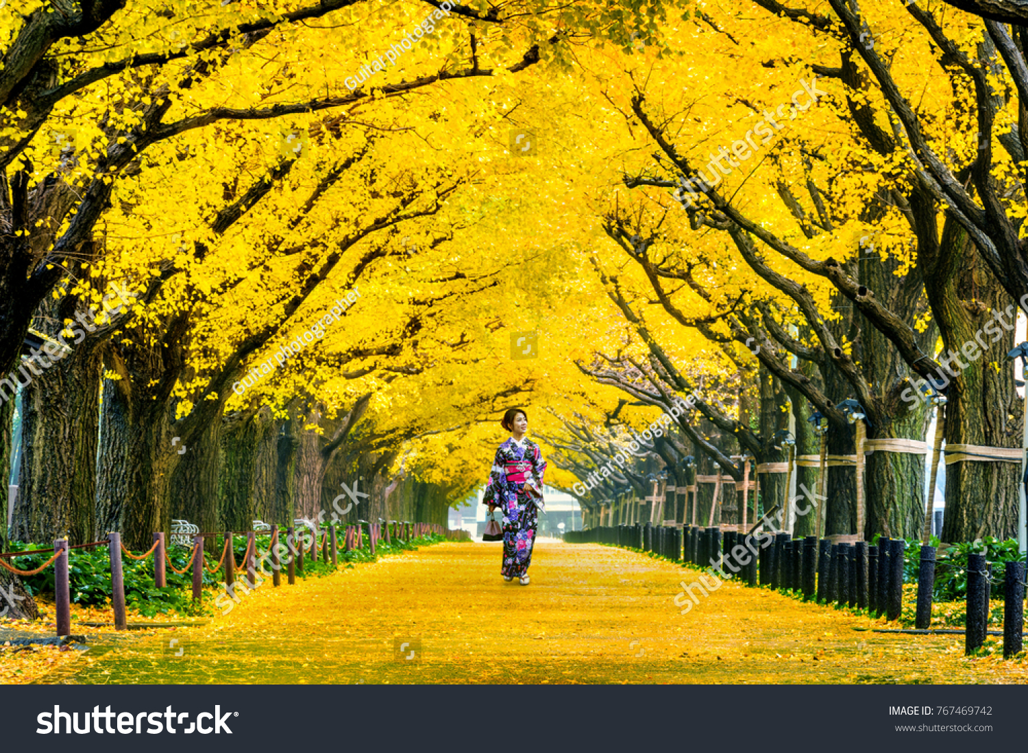 Beautiful girl wearing japanese traditional kimono at row of yellow ginkgo tree in autumn. Autumn park in Tokyo, Japan. #767469742