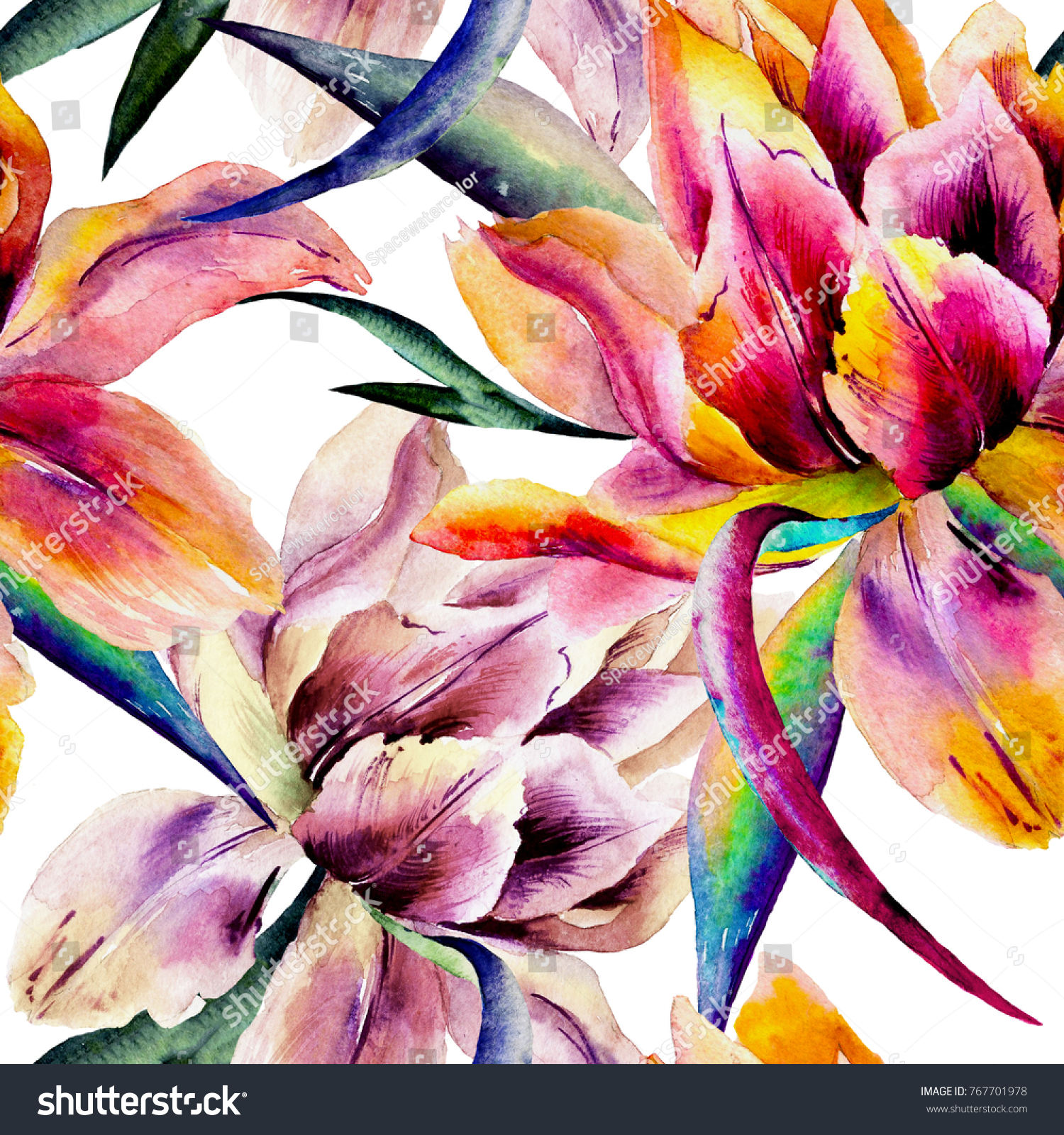 Watercolor Hand Drawn Tulip Flowers Wild Exotic Stock Illustration ...
