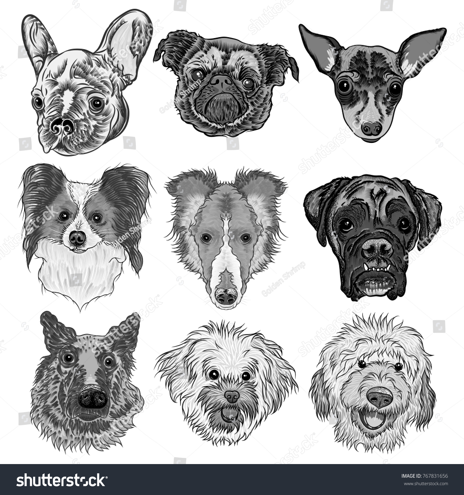 Set Different Dogs Breeds Isolated On Stock Illustration 767831656 ...