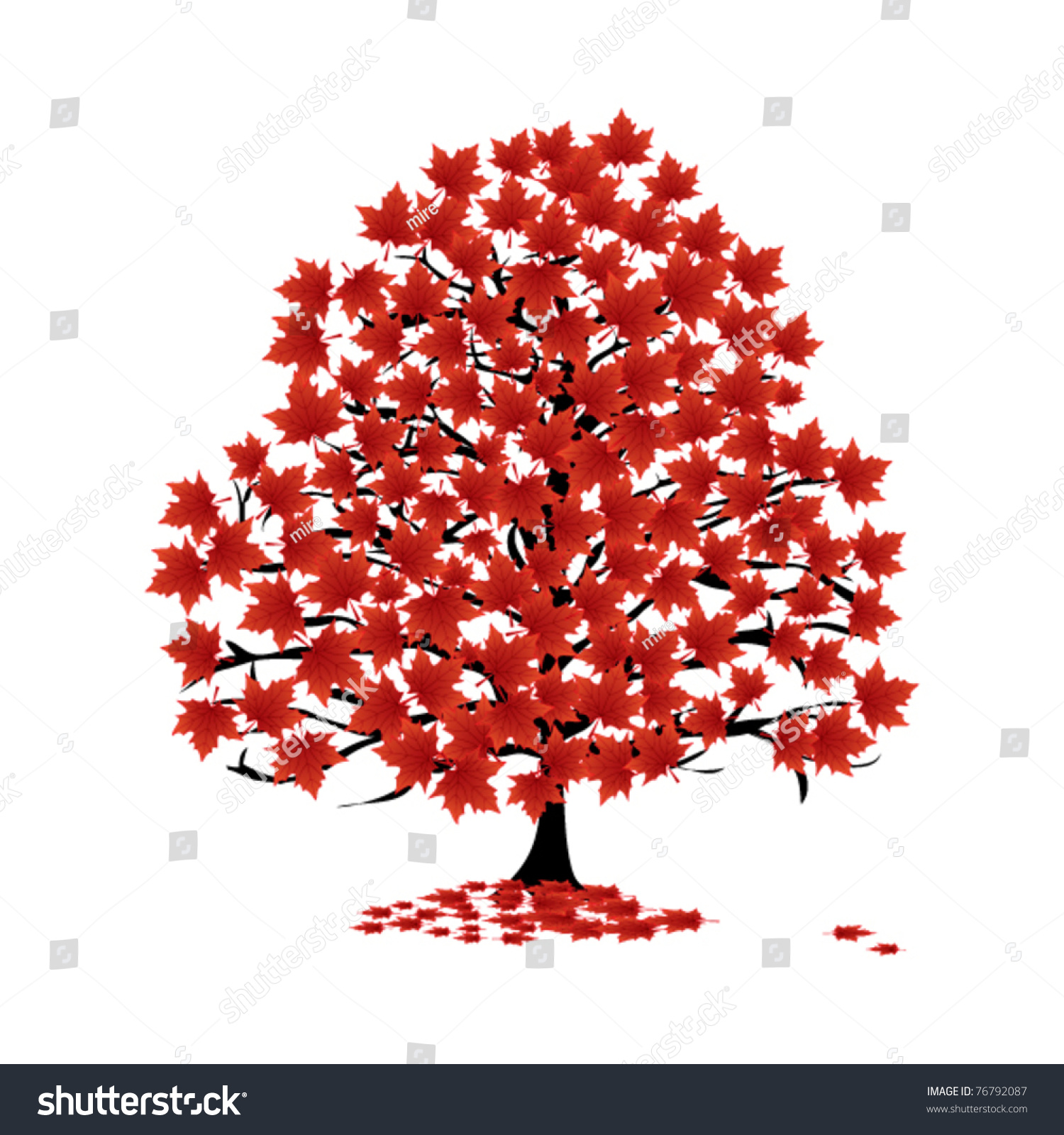 tree seed helicopter with Stock Vector Maple Tree Illustration Vector on Field Maple Acer C estre Fruits Bob Gibbons additionally Seeds also Royalty Vrije Stock Foto S De Zaden Van De Esdoorn Op De Boom Image28336168 also Propagation With Wind as well Sementes Voadoras Tipo Helicoptero.