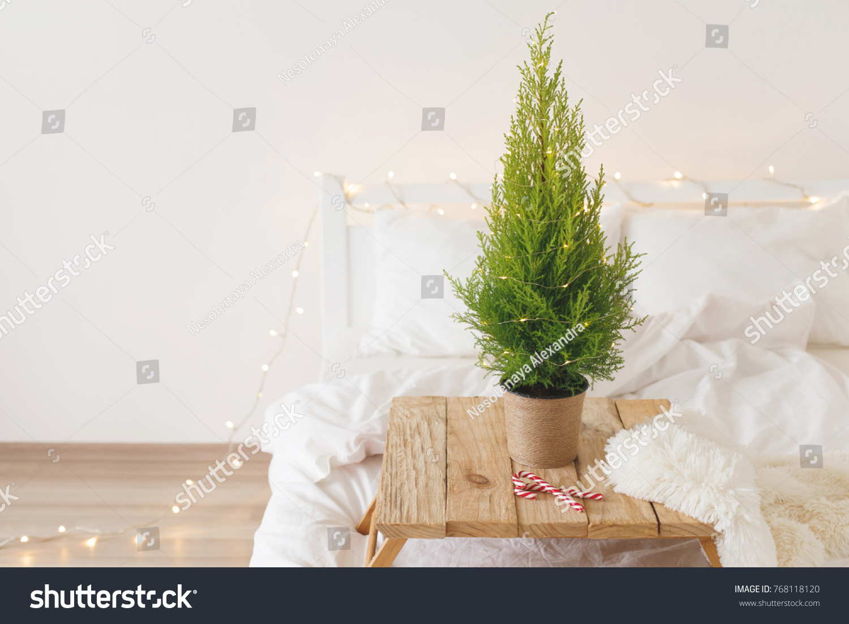 Little Christmas Tree Pot Standing On Stock Photo Edit Now