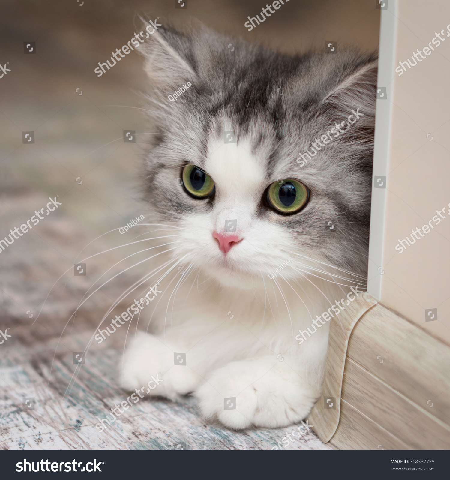 Cute Beautiful White Cat Portrait Closeup Stock Photo Edit Now 768332728