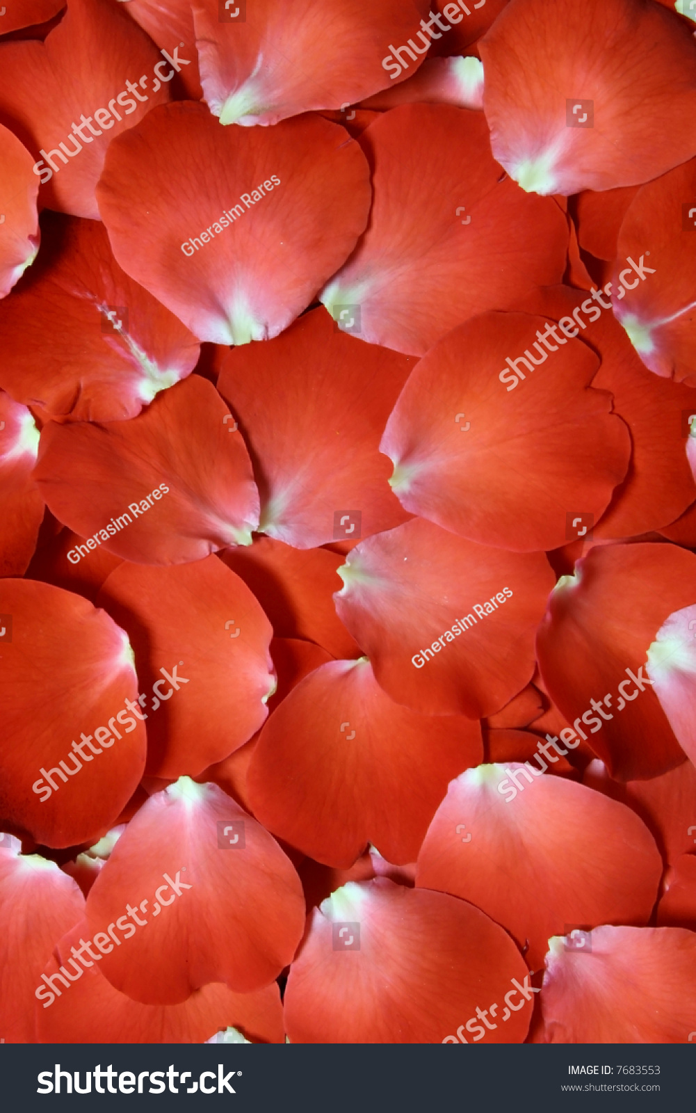 Where To Buy Rose Petals For Bed 28 Images Where To
