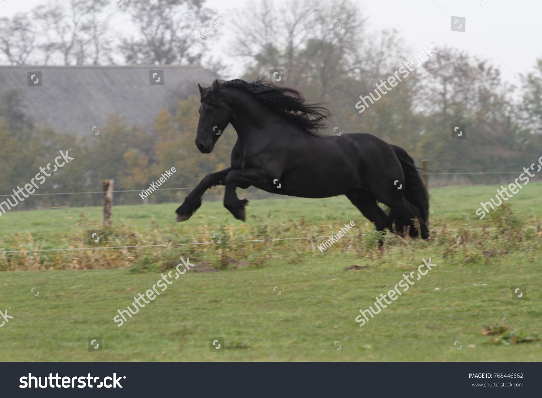 Friesian Horse Jumping Meadow Foto De Stock Editar Ahora 768446662
