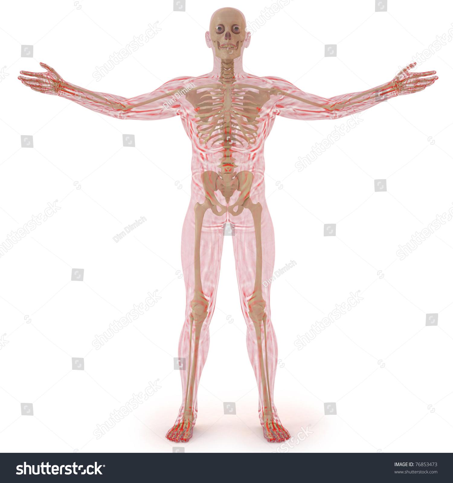 Translucent Human Body Visible Bones Isolated Stockillustration