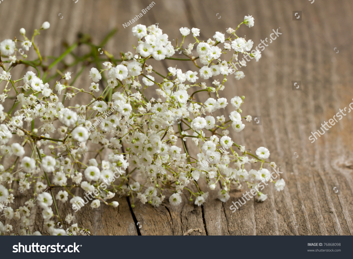 Bunch Gypsophila Baby S Breath Flowers Old Wooden Table Stock Pho