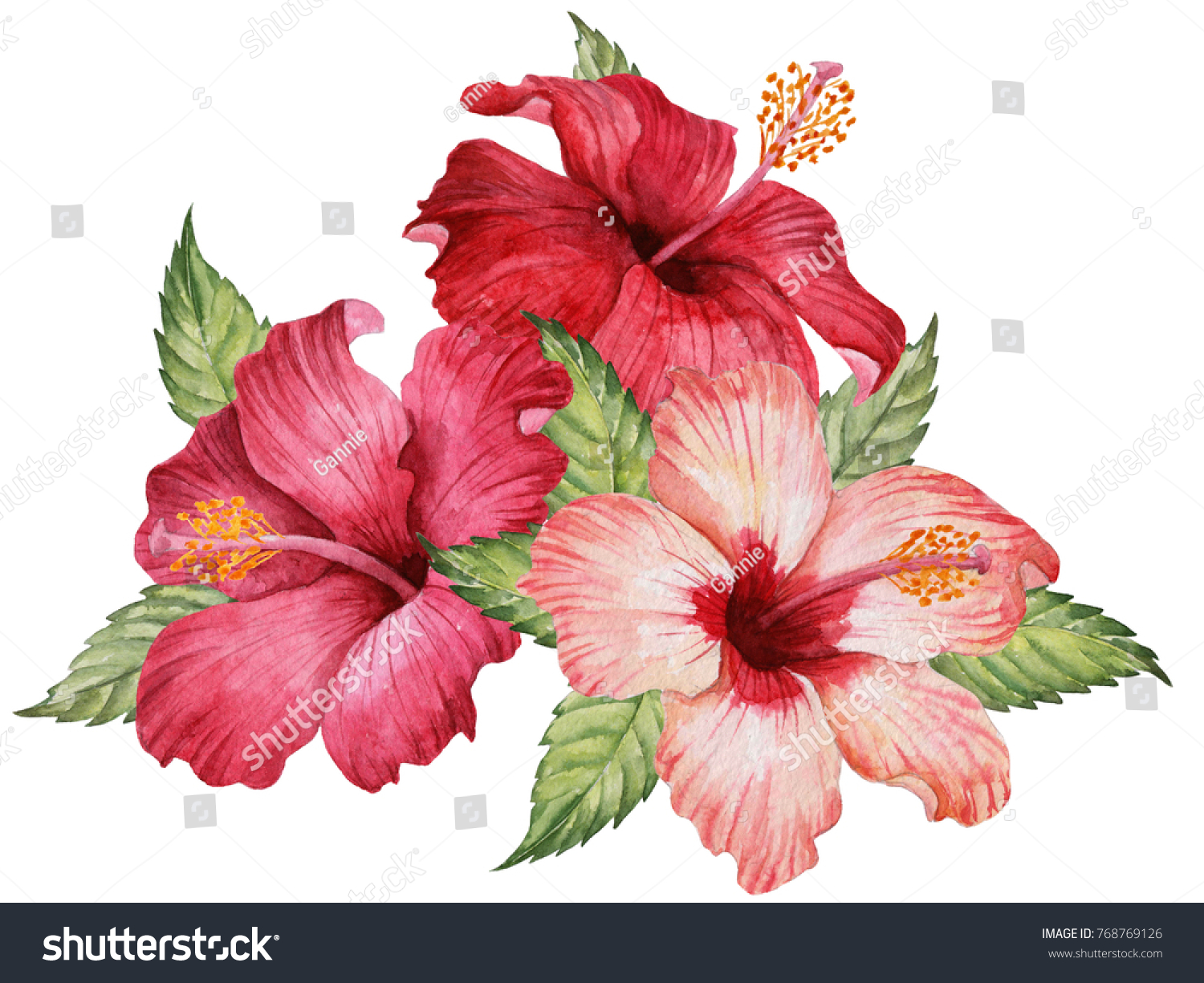 Watercolor composition hibiscus flowers leaves hand stock watercolor composition of hibiscus flowers and leaves hand drawn floral illustration elegant bouquet isolated izmirmasajfo