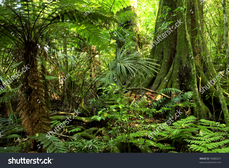 Tropical Rainforest Food Chain  Australian Travel Guide