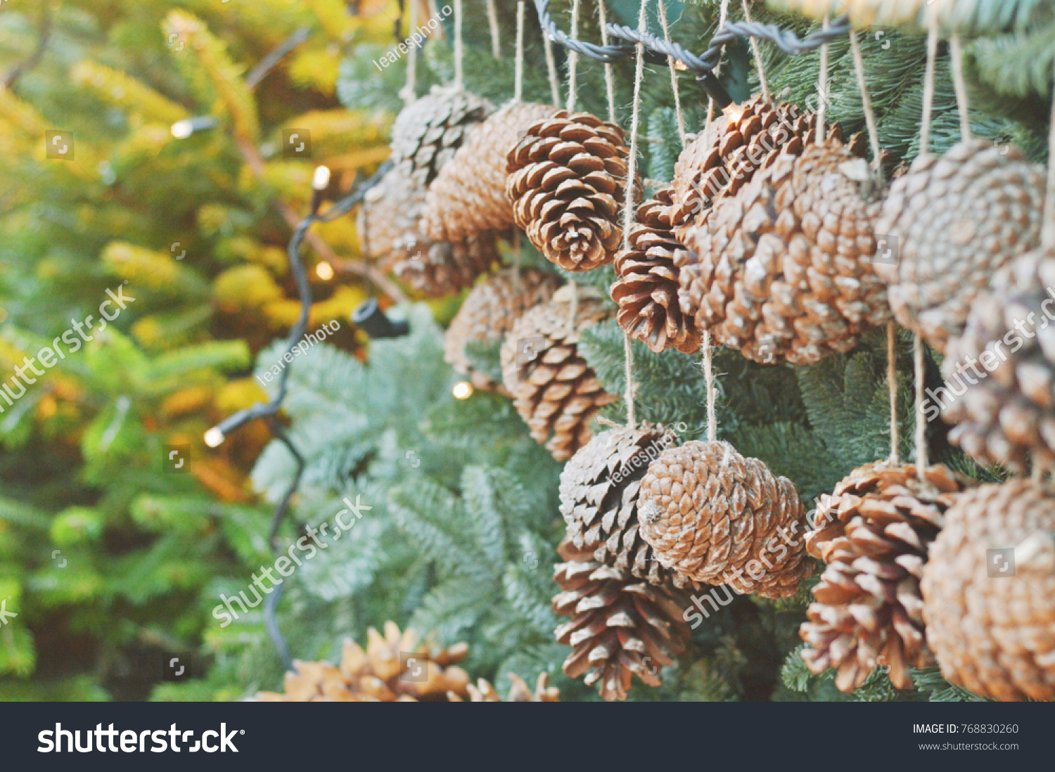 large pine cones like christmas decorations on a background of green spruce closeup photo