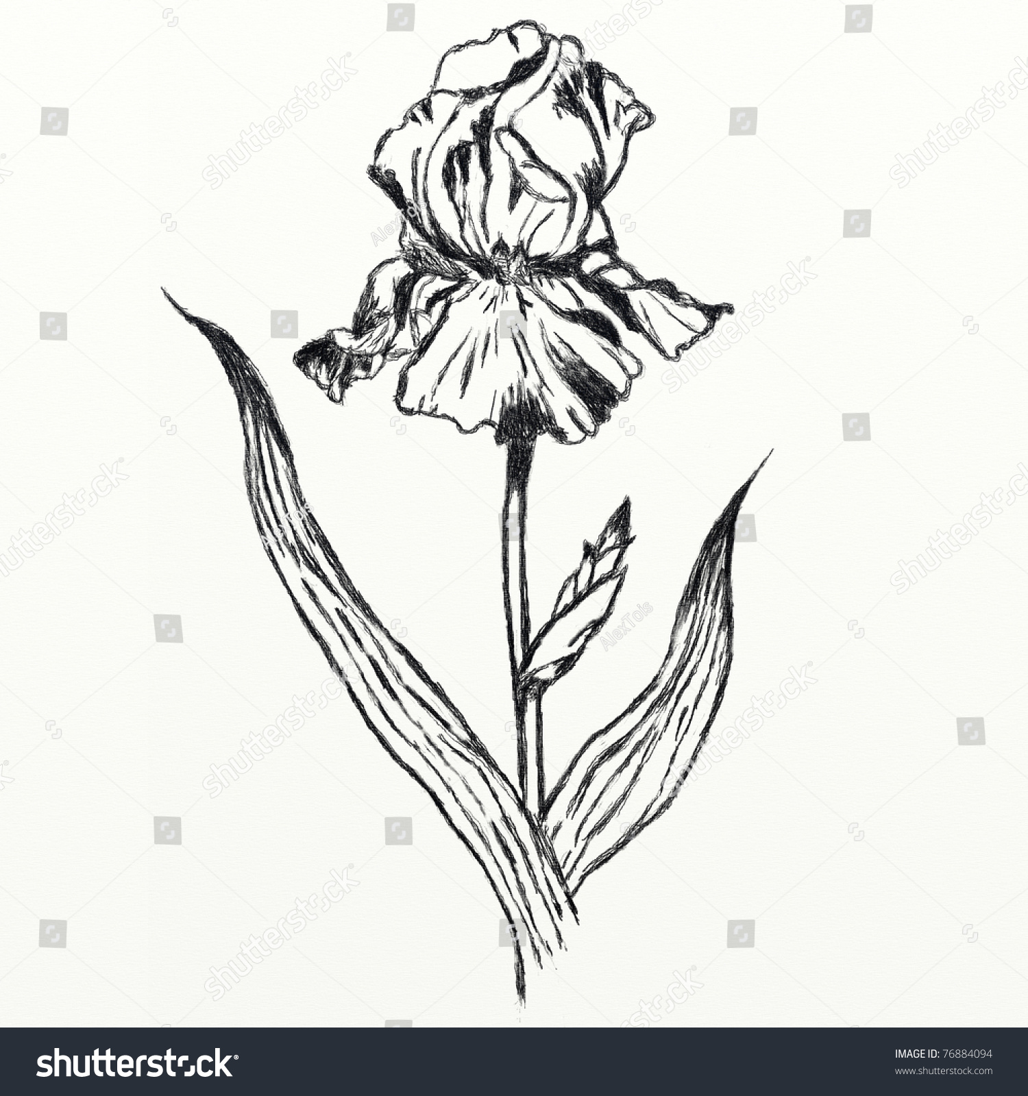 Iris Flower Black And White 3332083 Sciencemadesimplefo