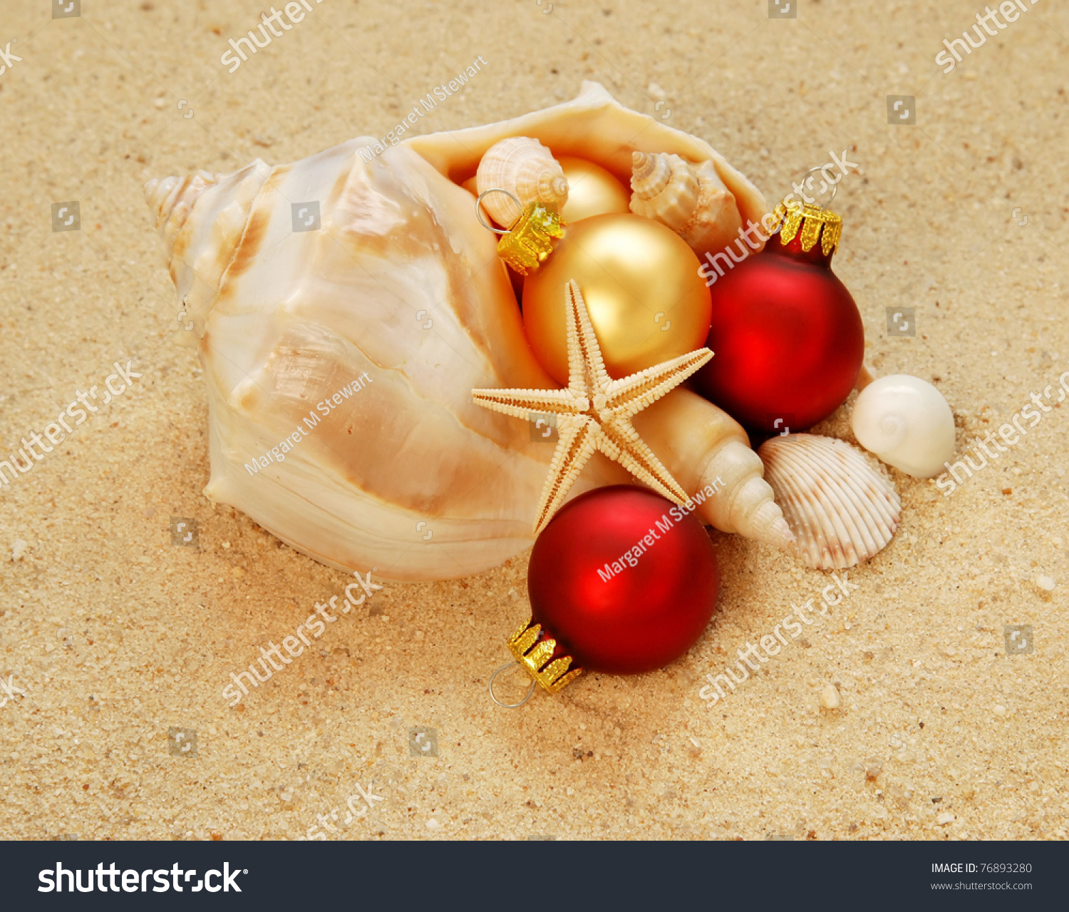 Large conch shell filled christmas ornamentsshells stock