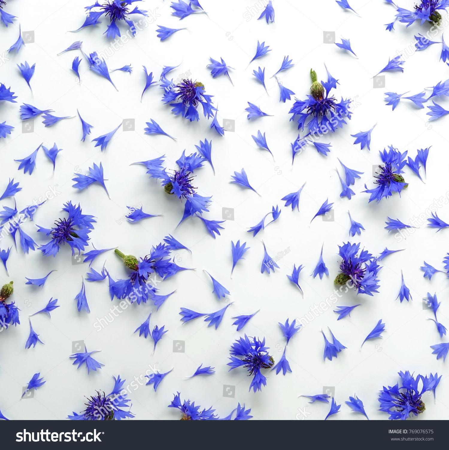 Blue Flowers Cornflowers Pattern On White Stock Photo Royalty Free