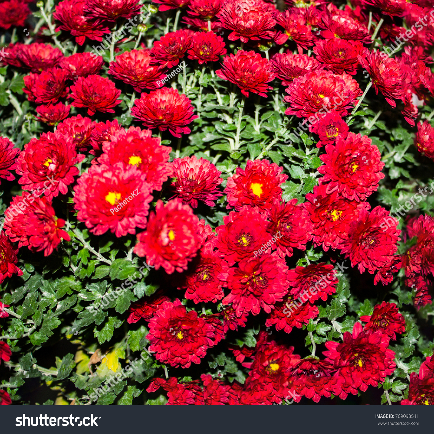 Bright Beautiful Flowers Stock Photo Edit Now 769098541 Shutterstock