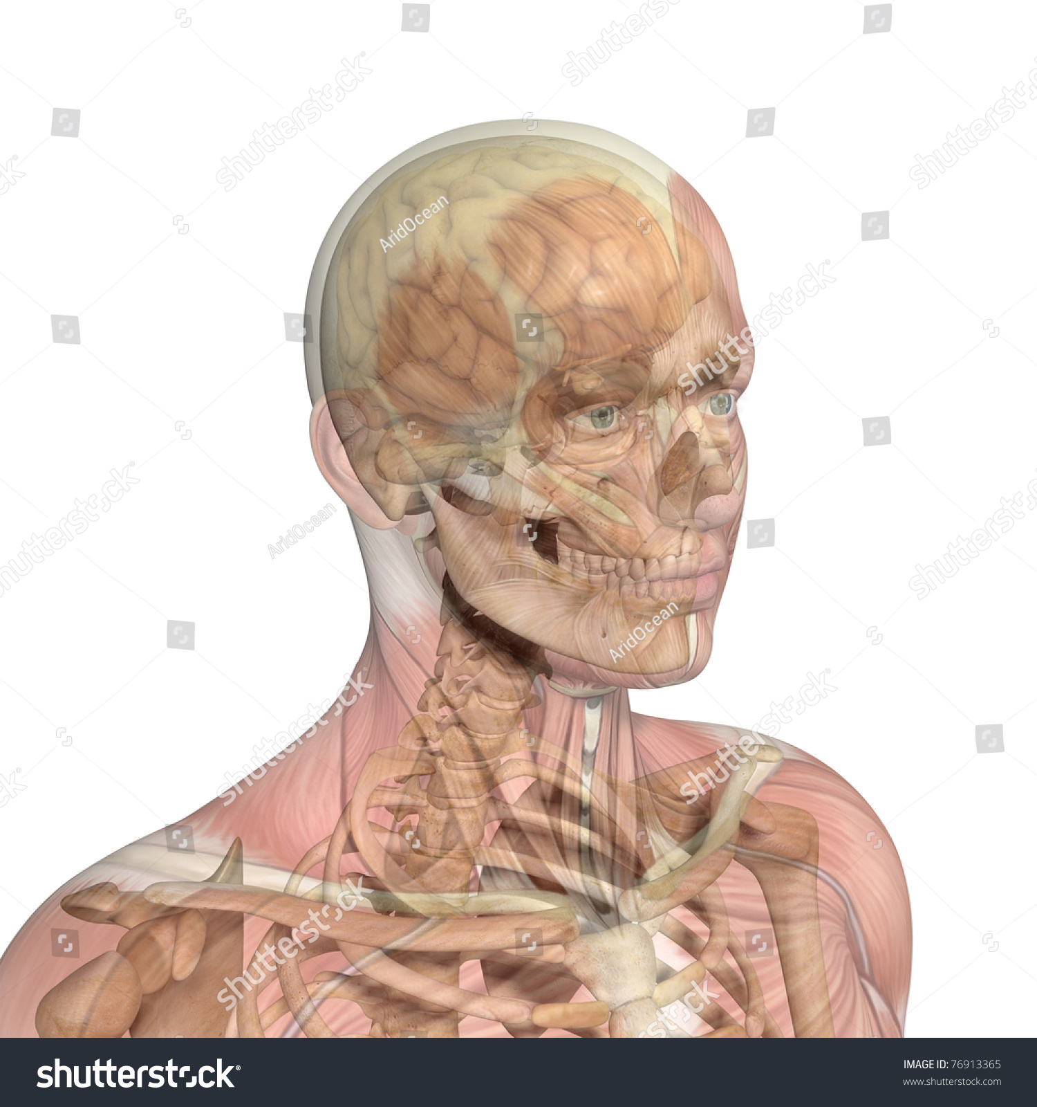 Male Head Skull Brain Showing Through Stock Illustration 76913365 ...