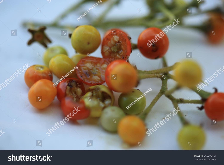 Solanum Sanitwongsei Herb Treatment Cough Sore Stock Photo