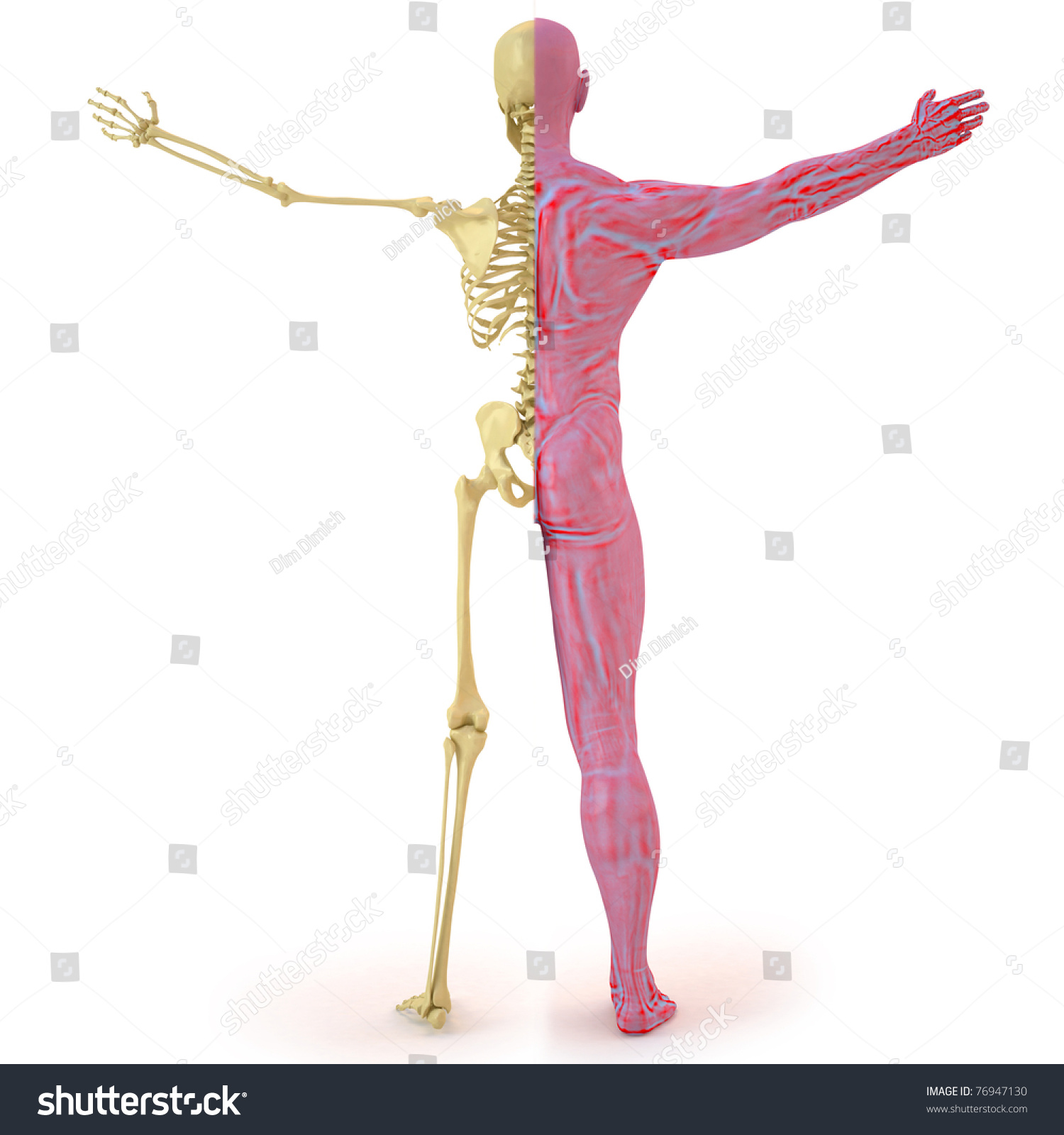 Royalty Free Stock Illustration Of Anatomical Structure Body Man