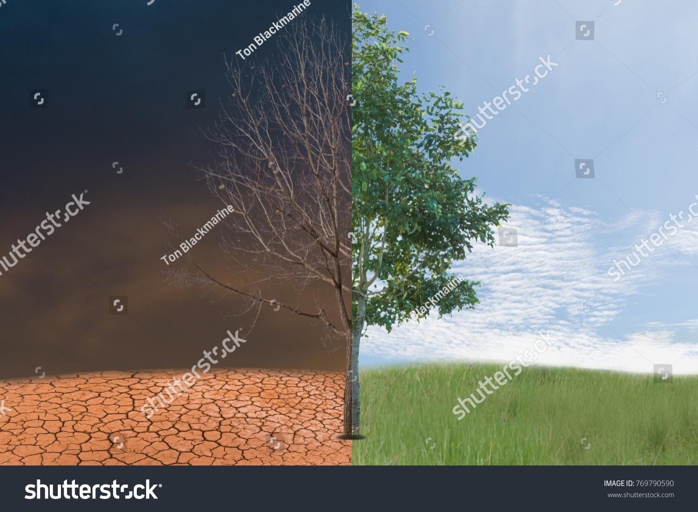 Half Alive Half Dead Tree Stock Photo Edit Now 769790590