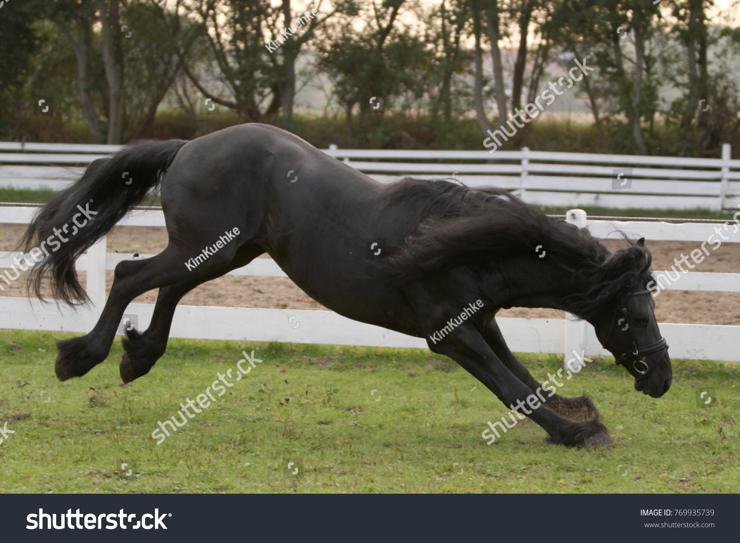 Jumping Friesian Horse Stock Photo Edit Now 769935739
