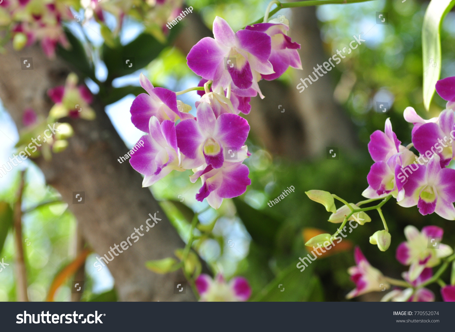 Beautiful Orchids Flower Purple Color Naturally Beautiful Flowers