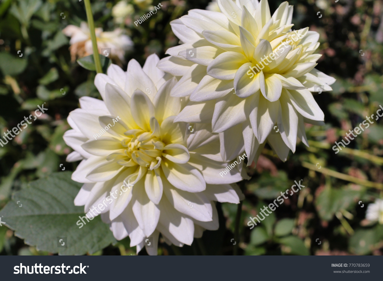 Group Of Flowers With White Petals Look Fresh Clean Ez Canvas