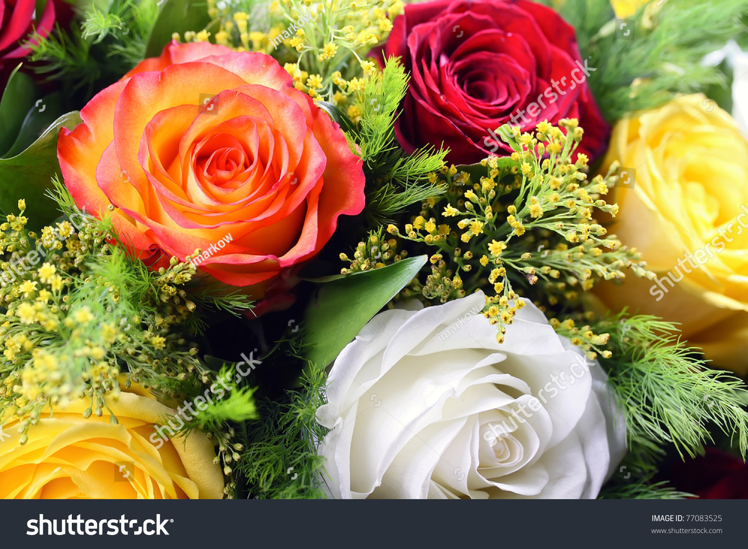 Bouquet different color roses stock photo 77083525 for Different color roses bouquet