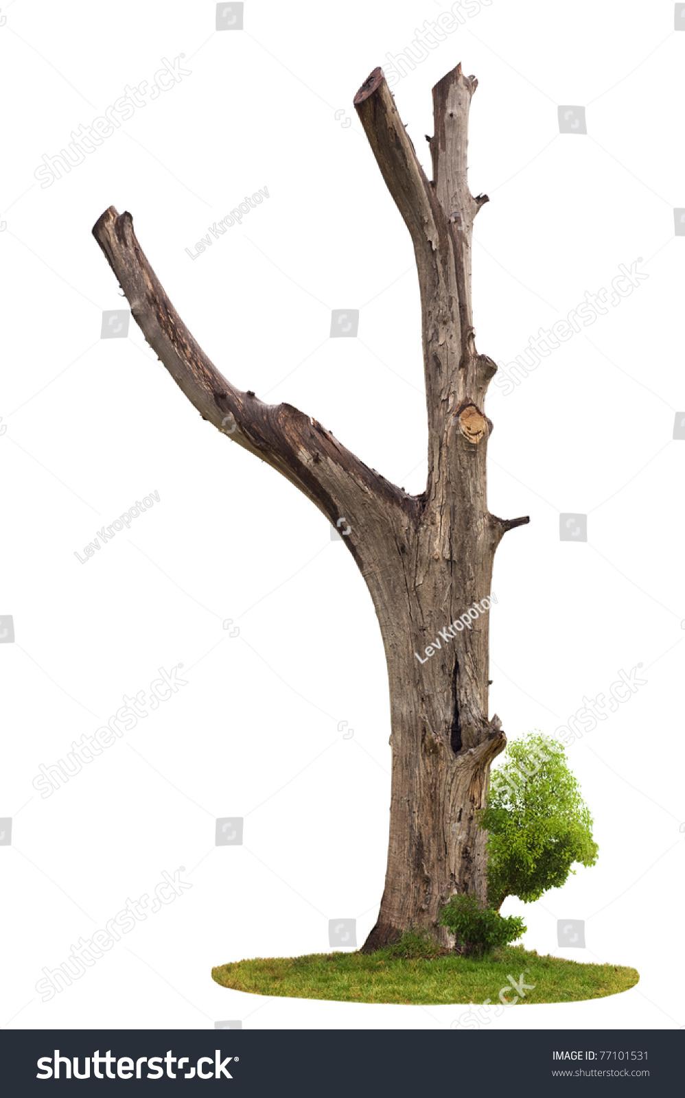 Сучки на дереве 8 фотография