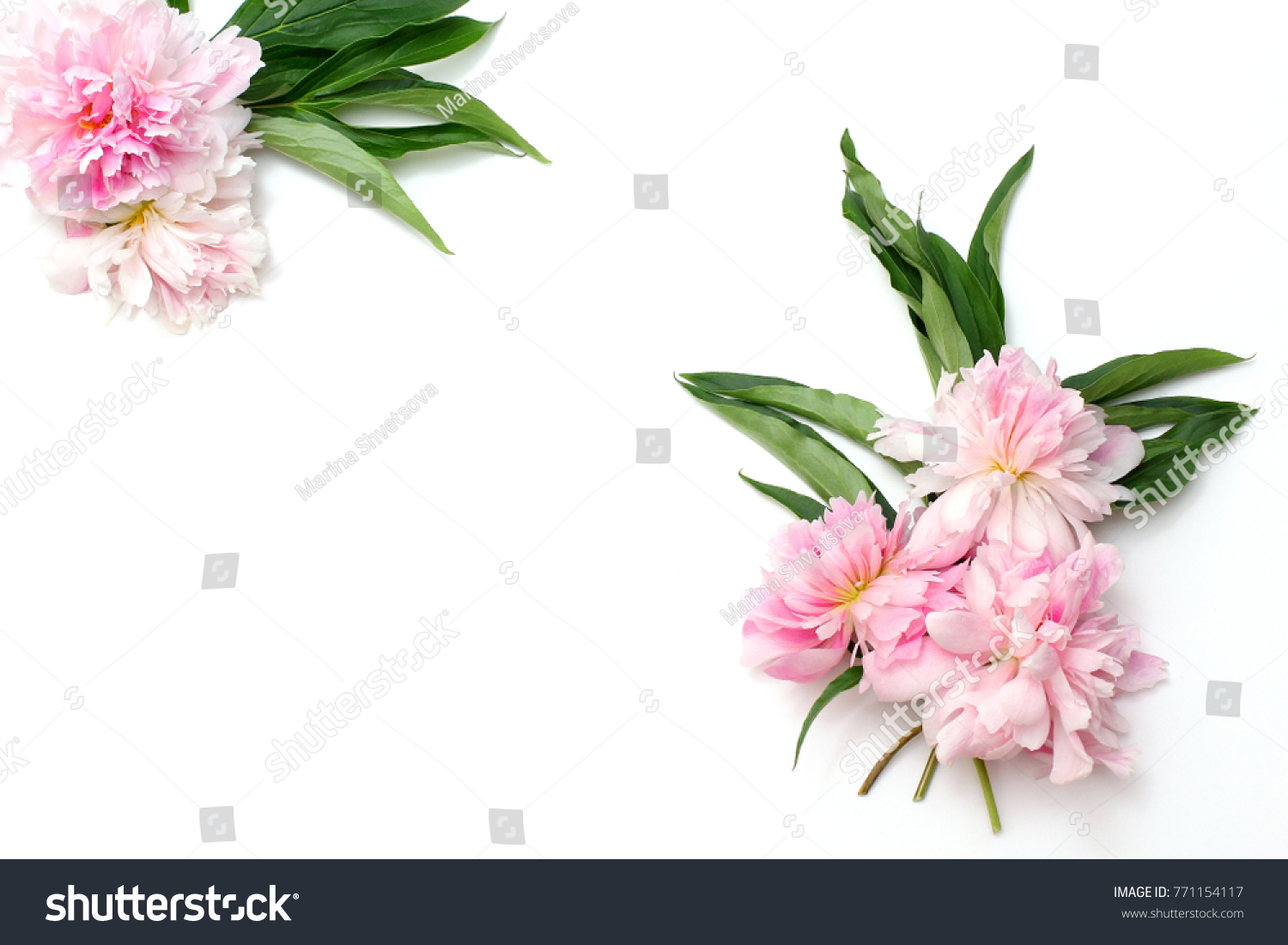Frame Flowers On White Background Composition Stock Photo Edit Now