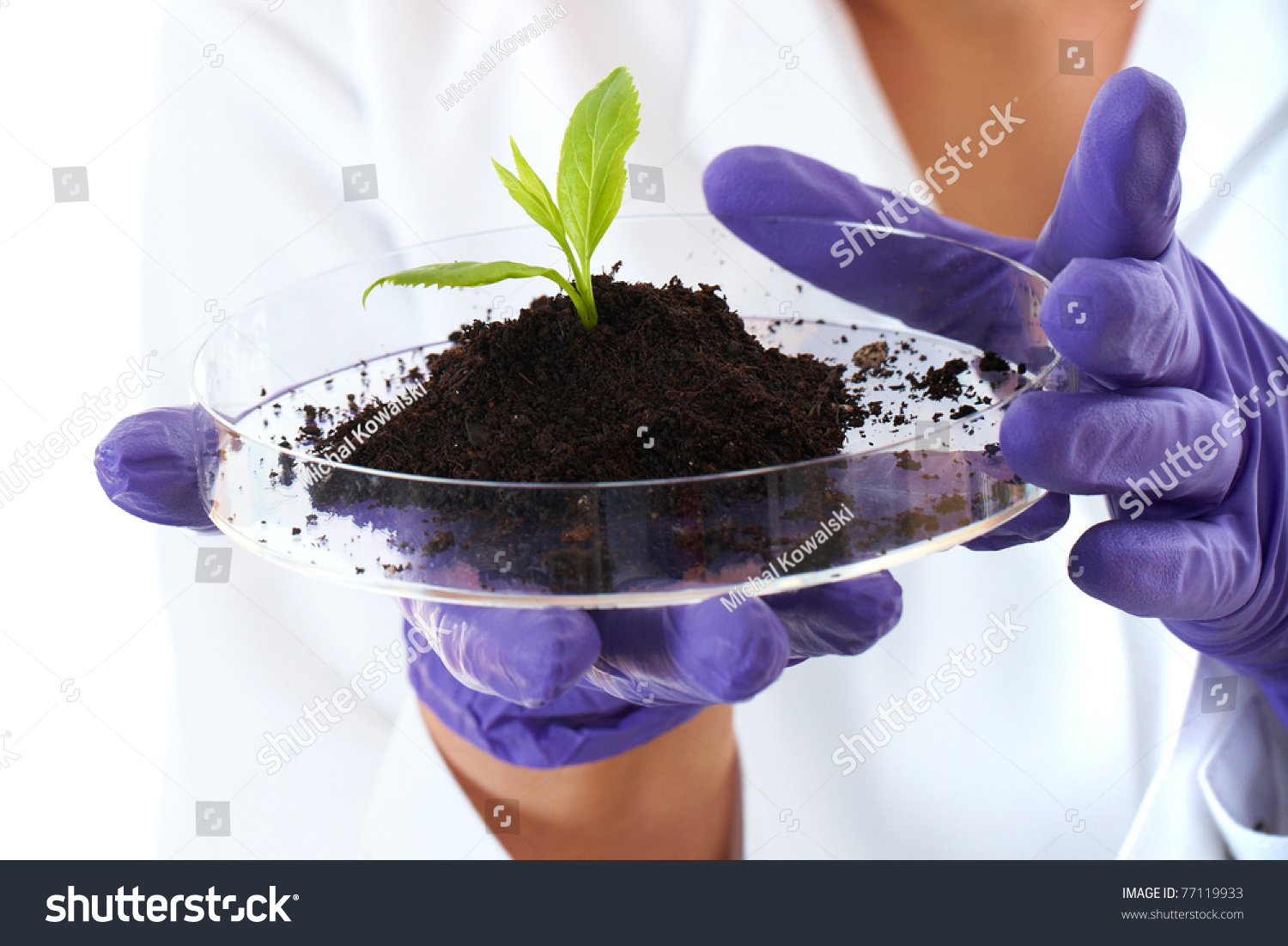 Lab assistant holds small flat dish with soil and plant for Soil and plant lab