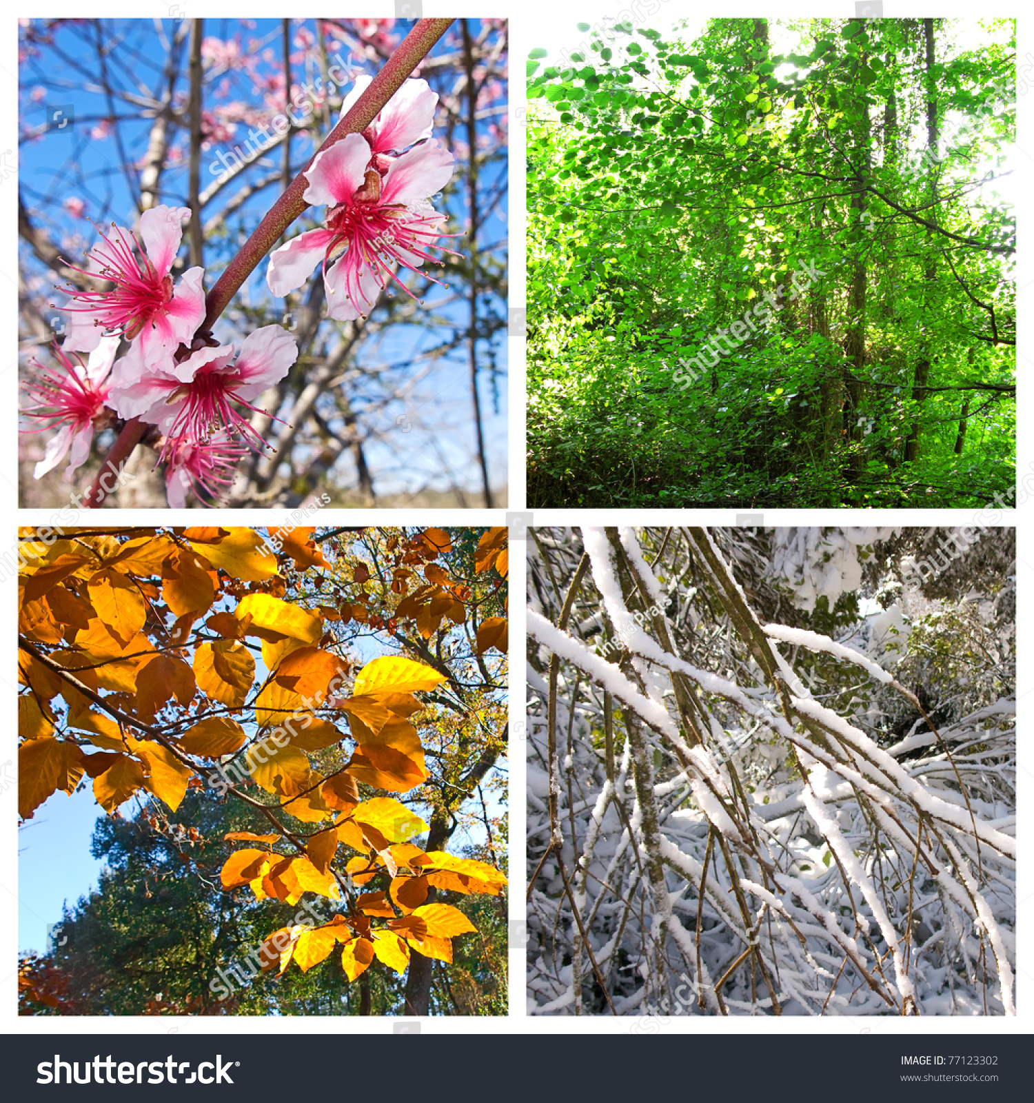 Four Seasons Pictures That Shows Four Stock Photo 77123302 ...