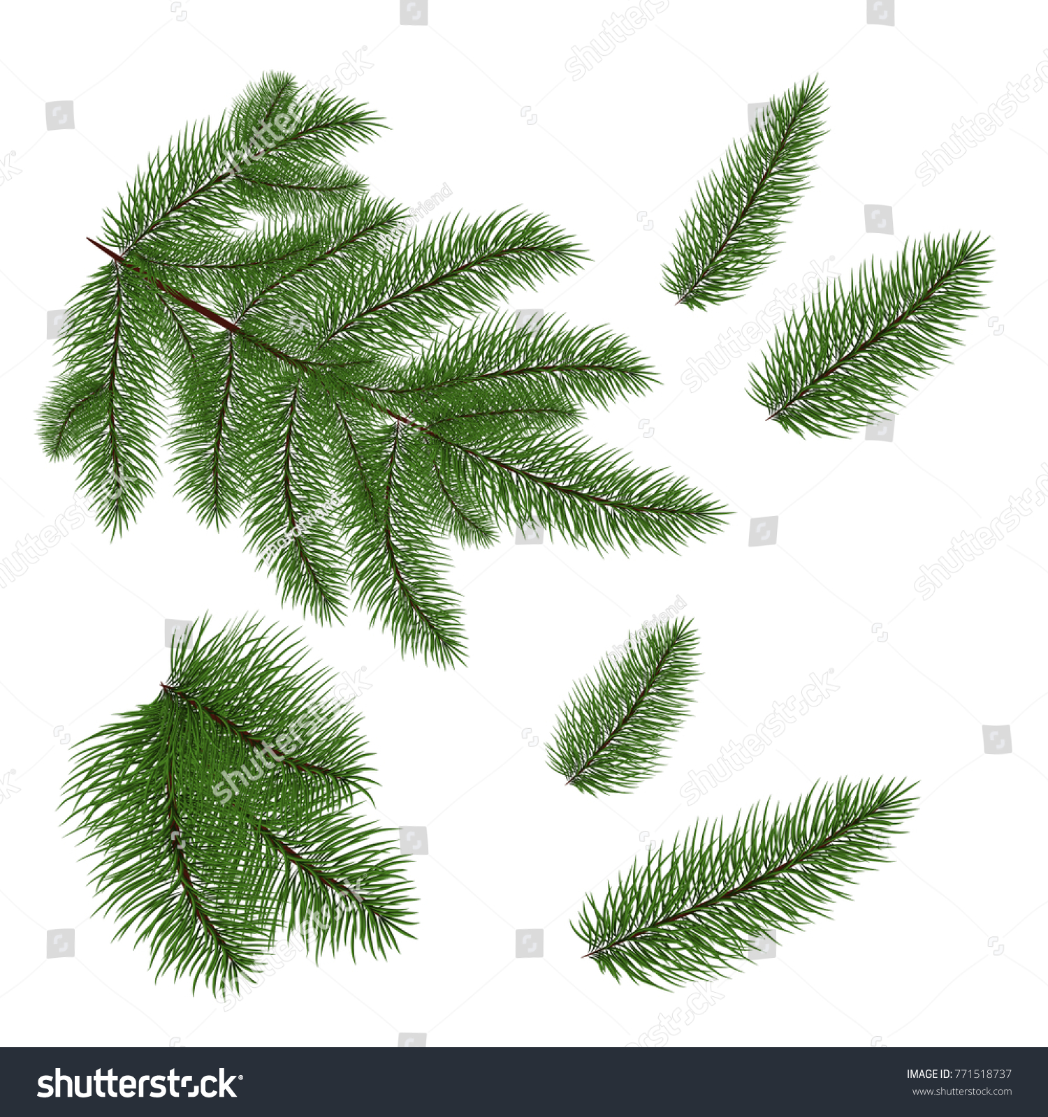 Set Of Christmas Tree Branches For A Decor Close Up Vector
