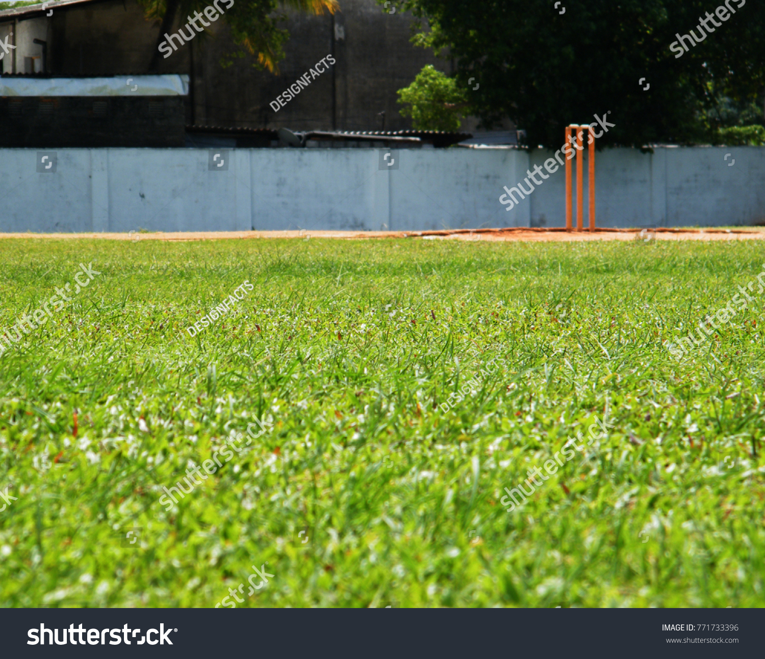 Turf Cricket Pitch Wicket Stumps Stock Photo (Edit Now